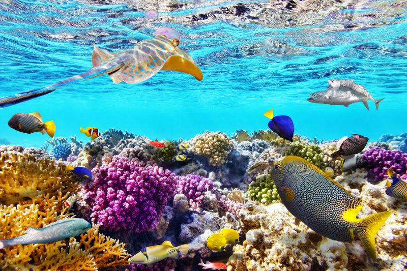 6.Vinegar used as weapon against reef threat