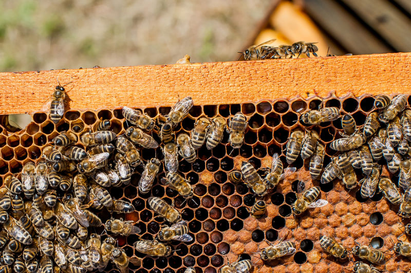 09.Beehive inventor wins over TV viewers